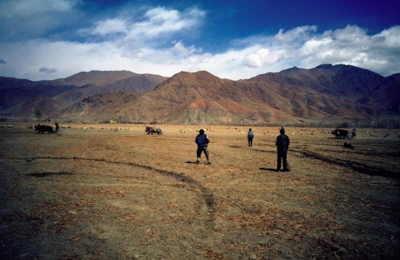 Tibet - Jackrennen
